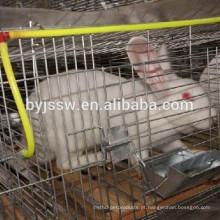 Alimentador automático de água para coelhos