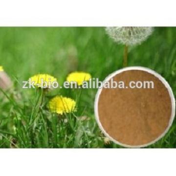Suministro mayorista de productos a base de hierbas Extracto de raíz de diente de león