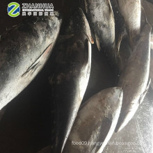 Best Quality Fresh Frozen Yellow Fin Tuna 20kg for Sale