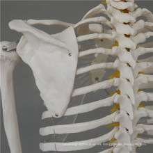 Esqueletos de plástico de 10 cm de la mejor calidad