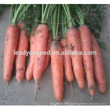 MCA07 Gaoji maturidade precoce op sementes de cenoura vermelhas para o plantio