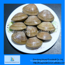 frozen clean surf clam for sale