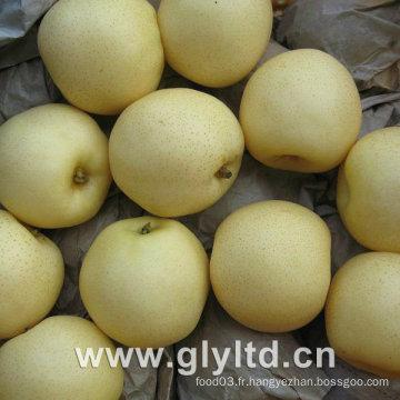 Ya Pear, Golden Pear, Crown Pear New Crop