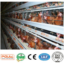 Équipement commercial de volaille de cage de poulet de poule de couche commerciale