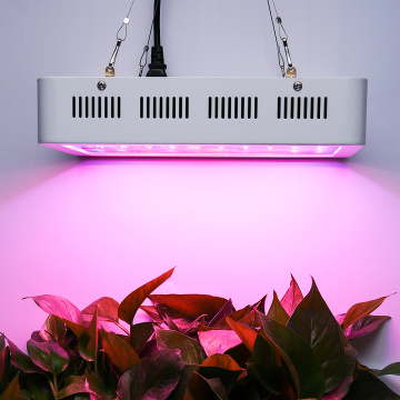 Full Spectrum LED Grow Light untuk dalaman