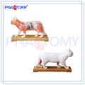 PNT-AM45 Modelo de acupuntura de gato modelo anatômico animal
