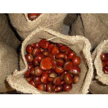 High Quality Nzuri ya kitamu safi Chestnut
