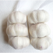 New Crop Pure White Garlic (5.0cm and up)