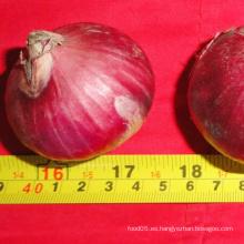 Precios de cebollas frescas de cebolla