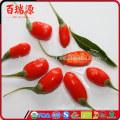 Goji berry emagrece goji bushes goji berries vitamin c