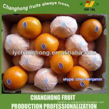 Свежий пупок оранжевый / свежий кислый апельсин