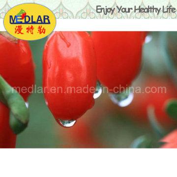 Органические Мушмула здоровая еда китайский wolfberry--220ПК/50г