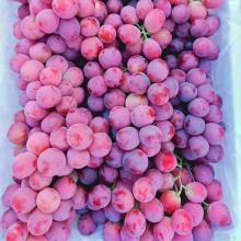 good quality 2020 crop  fresh grape