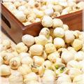 Органических Семян Лотоса Китайские Семена Nelumbini