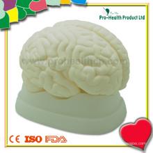 Modelo analógico de cérebro humano anatômico