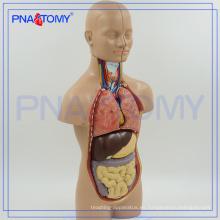 PNT-0320 Modelo de torso anatómico humano de 50 cm con 12 partes, sin sexo anatómico