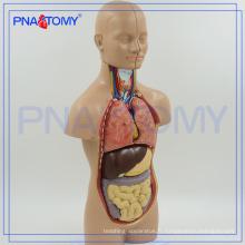 PNT-0320 Modèle de torse anatomique humain de 50cm avec 12 parties, anatomiques asexuées