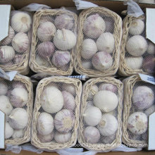 2015 High Quality Red Solo Garlic (4.5cm and up)