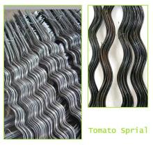 Espirales de tomate / jaula de tomate - una ayuda muy útil para el ahorro de espacio