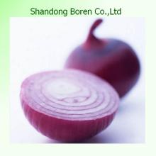 Oignons rouges frais avec une qualité supérieure au Shandong