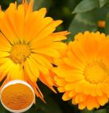 calendula extract / Calendula offcinalis flower extract / pot marigold extract