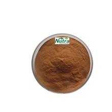 Polvo de extracto de hongo chaga orgánico