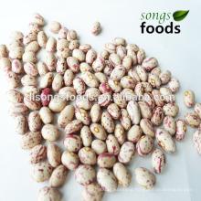 Wholesale Beans, Import Beans