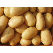 Spécifications en gros de pommes de terre