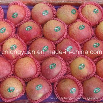 Bonne qualité Qinguan Fresh Fresh
