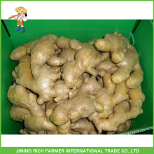 High Quality 250g up Air Dried Ginger with best price