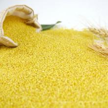 Balle de maïs de consommation humaine Millet décortiqué à vendre, jaune