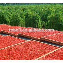 2015 new goji berry, dried goji berry
