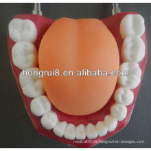 Nuevo modelo de cuidado médico dental estilo, limpieza de dientes