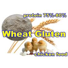 Whaet Gluten pour l'alimentation avec des protéines élevées (75% 80%)