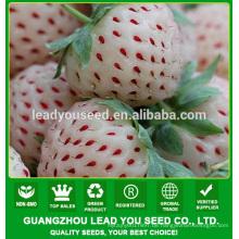 SB02 Bailing neue Ankunft gute Qualität f1 Hybrid weiße Erdbeere Samen