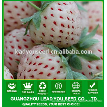 SB02 Bailing new arrival good quality f1 hybrid white strawberry seeds