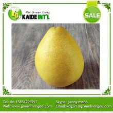 Great Taste Fruit Grapefruit Wholesale