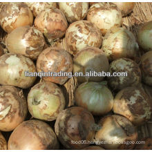 Chinese onin crop 2012