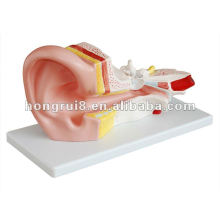 ISO 2012 estilo nuevo anatómico de oído grande