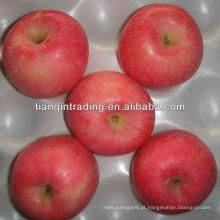 qixia fuji apple