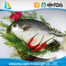 Peixes congelados do Pomfret na venda