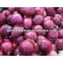 Cebolla fresca Cebolla fresca china
