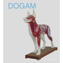 Modelo de acupuntura para perros
