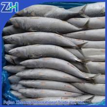 frozen mackerel prices pacific mackerel scientific name of mackerel fish