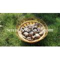 Healthy Fresh Vegetable Smooth Shiitake Mushroom