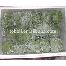 Chinese fresh broccoli