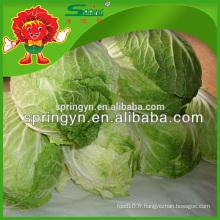 Exportateur de légumes en Chine Choux biologiques frais de haute qualité