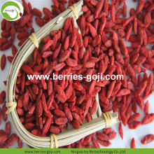 Approvisionnement d'usine Fruits Premium Red Goji Berry