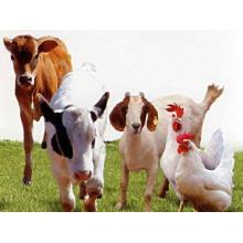 (Enrofloxacin Hydrochloride) -Veterinary Drugs Enrofloxacin Hydrochloride