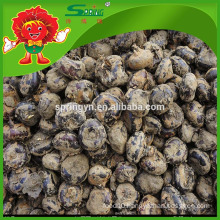 Wholesale bulk Chinese water chestnut for export price per ton